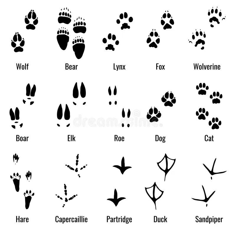 Wildlife Animals, Reptiles And Birds Footprint, Animal Paw