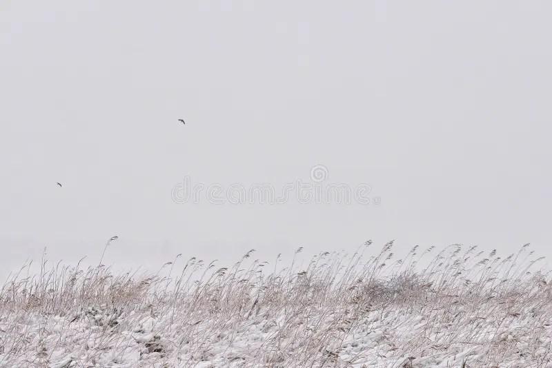 Winter minimalism stock photo. Image of pine, minimalistic