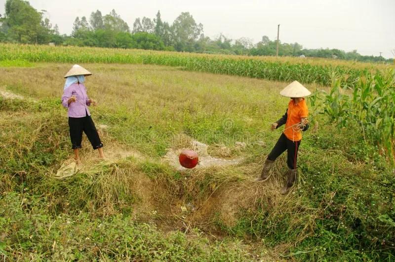 Women Performing Manual Irrigation Editorial Image - Image of woman. corn: 19788020