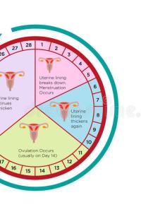 Download women   fertility cycle calendar with different stages editable clip art stock vector also rh dreamstime