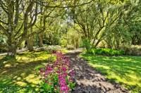 Woods In Logan Botanic Gardens Stock Photo - Image: 32693222