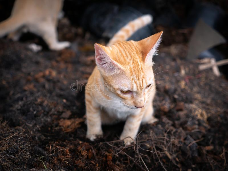 Yellow Kitty Feces On A Pile Of Soil Stock Image - Image ...