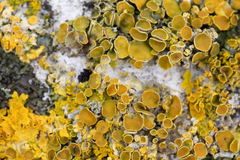 Yellow Mold Growth On Decaying Seeds Of Plant Stock Photo ...