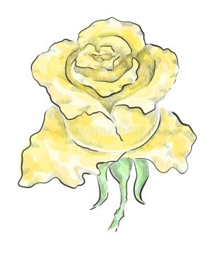 yellow rose clip vector drawn hand illustration transparent graphic monochrome roses royalty texas gograph