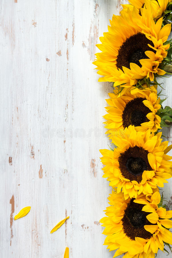Rustic Fall Desktop Wallpaper Yellow Sunflower Bouquet On White Rustic Background Stock