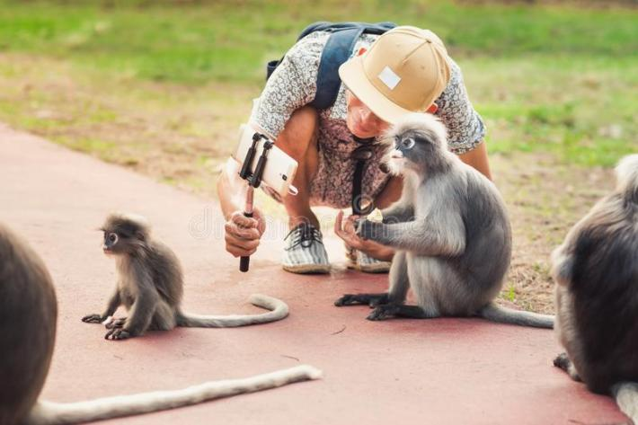 Risultati immagini per monkeys selfie
