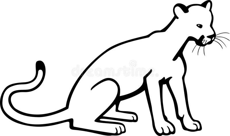 Young Puma stock vector. Illustration of nature, mammal