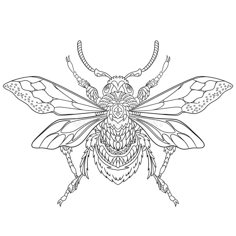 Drawn Beetles
