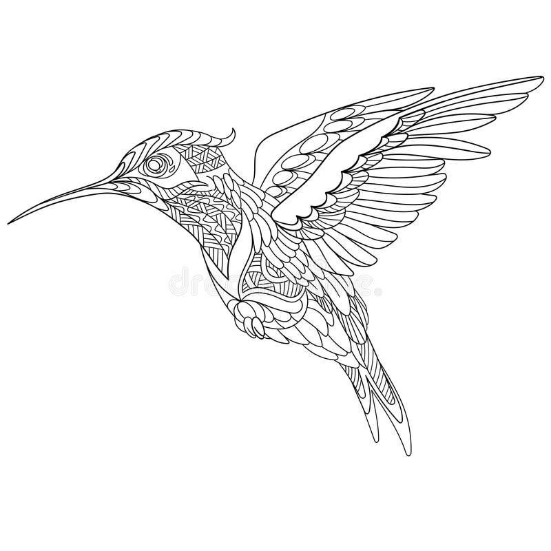 Hand Drawn Sketch Cartoon Illustration Of Hummingbird