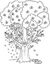 Yggdrasil: The Celtic Tree Of Life Vector Stock Photo