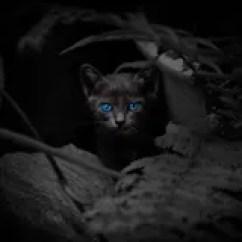Boos Kitchen Islands Vans 与美丽的蓝眼睛的恶意嘘声库存图片 图片包括有万圣节 Beautifuler 投 投反对票 头发 124555543