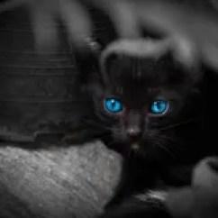 Boos Kitchen Islands Fan For Exhaust 与美丽的蓝眼睛的恶意嘘声库存图片 图片包括有万圣节 Beautifuler 投