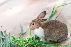 雪兔在冬天 庫存圖片. 圖片 包括有 懶散, 顏色, 棲所, 兔寶寶, browne, 縱向, 賣力, 兔子 - 84877379
