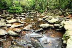 水春天在森林里 庫存照片. 圖片 包括有 生活方式. 健康. 森林. 自由. 風景. 綠色. 巖石. 曬裂 - 13089932