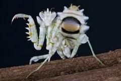 螳螂 圖庫圖片 – 4.787 螳螂 圖庫圖像 圖庫攝影和圖片 - Dreamstime