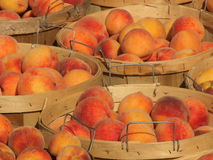 琥珀色的瓶子蜂蜜 庫存照片. 圖片 包括有 農場, 粘性, fest, 的根底, 食物, 自然, 裝于罐中 - 32257642