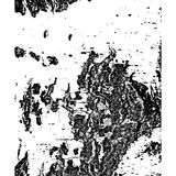 Birch bark surface texture stock photo. Image of pattern