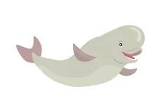 beluga whale cartoon cute illustration flat vector drawing dreamstime background illustrations character vectors arctic