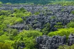 Dsert De La Savane De Paysage Du Madagascar Photo Stock