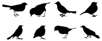 Crow Silhouette Stock Photos, Images, & Pictures
