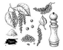 Pepper Plant Stock Illustrations