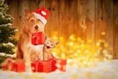 Gatto e cane di natale fotografia stock Immagine di incandescenza  15352136