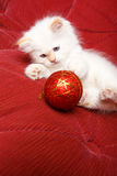 Cat with Christmas ball Stock Photo