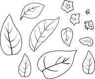 Coloring With Potato Plant Growth Cycle Stock Vector