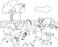 Coloring Page. Life Cycle Of Pear Tree. Plant Growth Stage