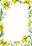 Flower Daffodil Frame Isolated On White Background Floral