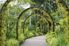 De Botanische Tuin Van Singapore Stock Afbeeldingen