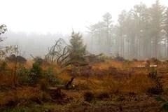 marsh landscape stock
