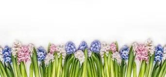 Bunter BlumenHintergrundRahmen Fr FrhlingsSaison