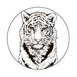 Bengal Tiger Stock Illustrations