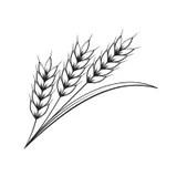 Black Wheat White Stock Illustrations