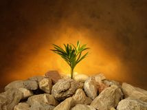 Growth among the stones Stock Photos
