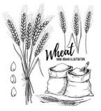 Wheat Elements stock vector. Illustration of line, barley