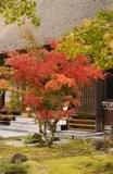 Herbstgarten stockfoto Bild von outdoor bltter nave  113718