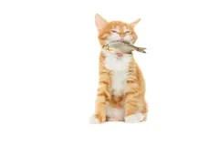 Lachende Orange Fische Lizenzfreies Stockbild  Bild 10824826