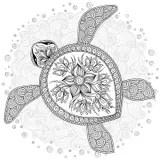 Turtle Stock Illustrations