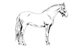 Harness Stock Illustrations