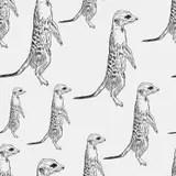Cartoon Meerkat, Suricate, Suricata, Suricatta Stock