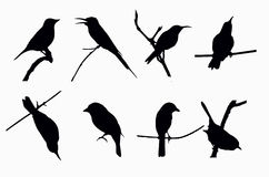Shadow Of Birds Flying Off Royalty Free Stock Image