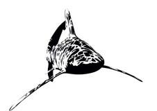 Shark Silhouettes stock vector. Illustration of vector