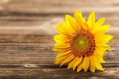 Fall Desktop Wallpaper With Sunflowers Rustic Background With A Sunflower And Wheat Stock Image