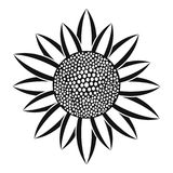 Sunflower Seed Stock Illustrations