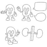 Cartoon Kidney Stock Illustrations