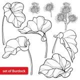 Seed Stock Illustrations