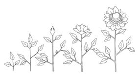 Sunflower Plant Growth Stages Concept, Vector Stock Vector