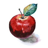 watercolor apple vector clip art